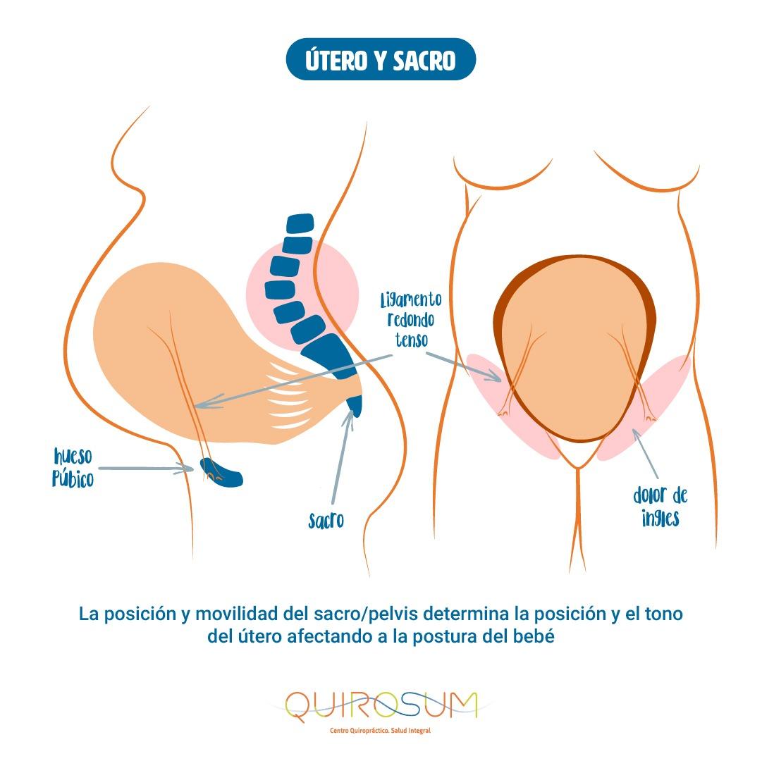 embarazo-gestacion-utero